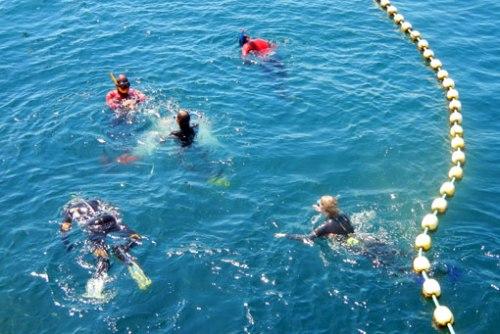 Los zcos en la piscina de los atunes.