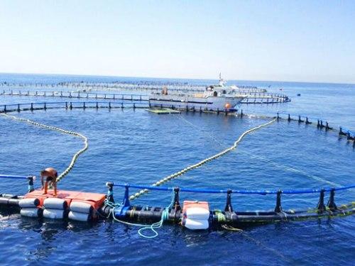 Una vista parcial de las piscinas donde engordan los atunes.